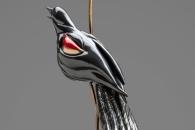 Red Winged blackbird (back)