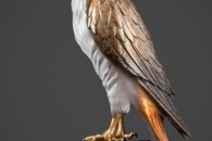 red-tailed-hawk base view