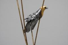 Yellow Headed Blackbird