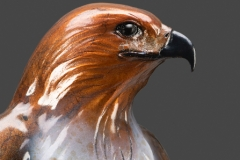red-tailed-hawk-close up