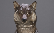 Wolf Front View